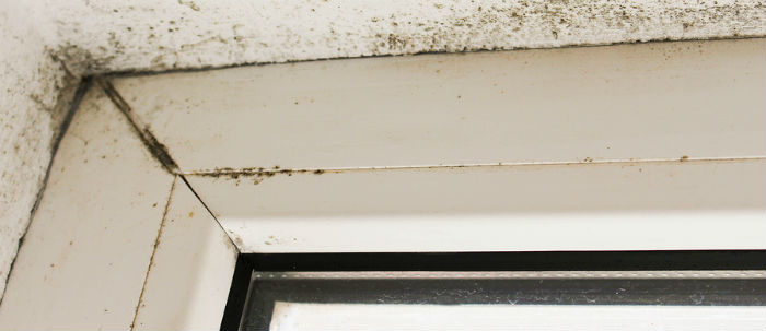Mold growth near a window corner